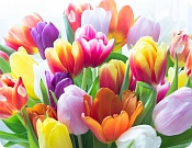 Placemat Colourful Tulips