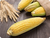 Placemat Sweet Corn